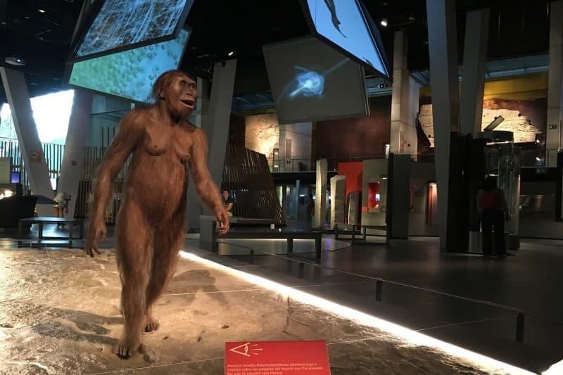 cosmocaixa human evolution exhibit