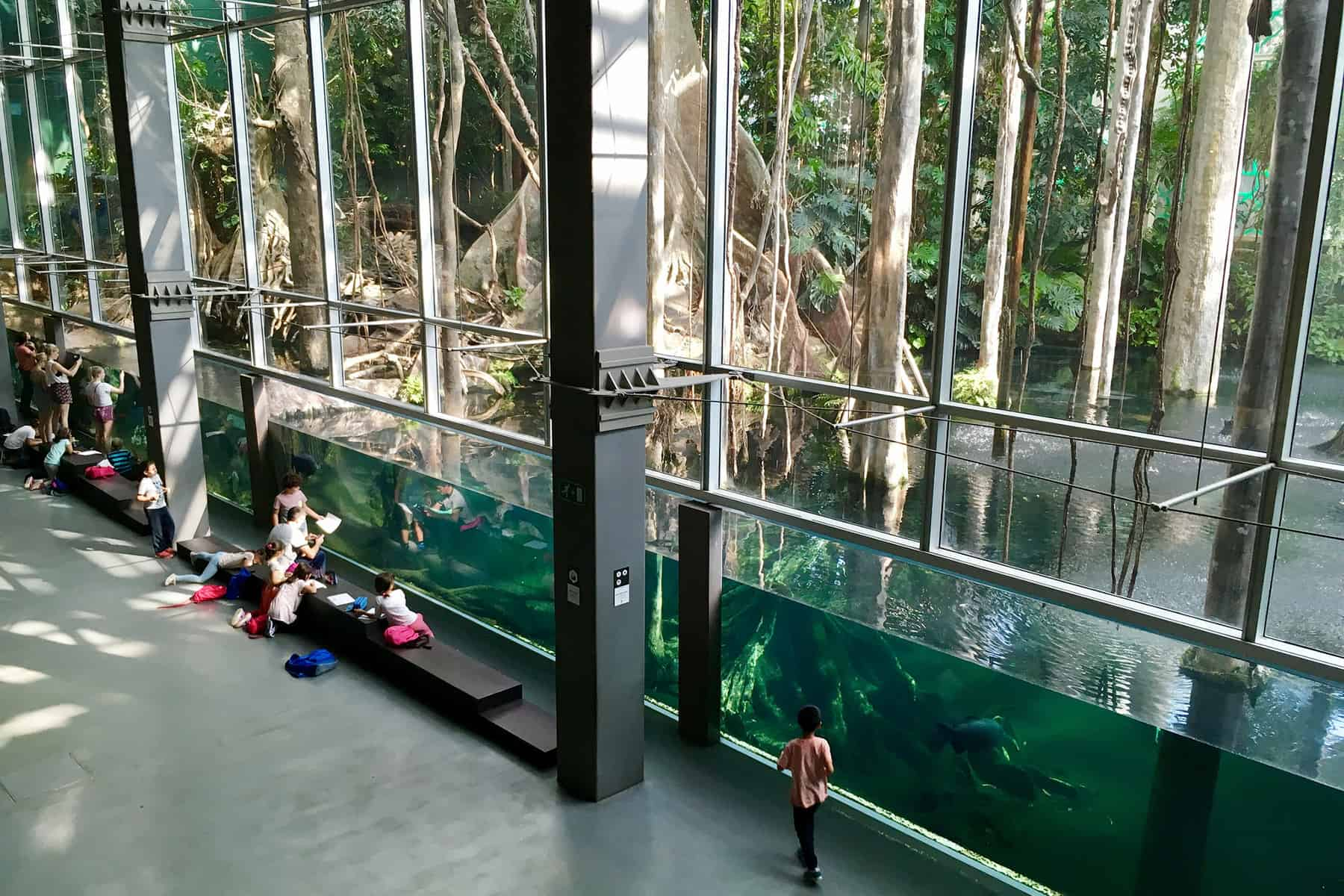 flooded rainforest display at the cosmocaixa