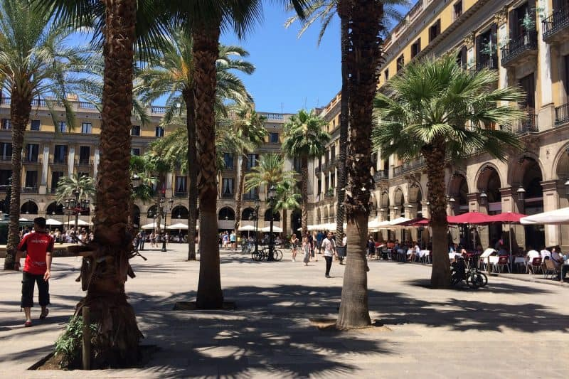 plaza real with palm trees
