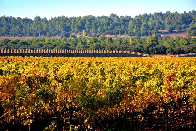 bodegas torres vinyard near vilafranca del penedes