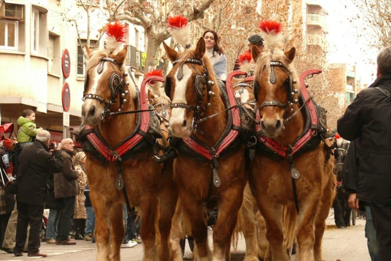 horses on parade for els tres tombs